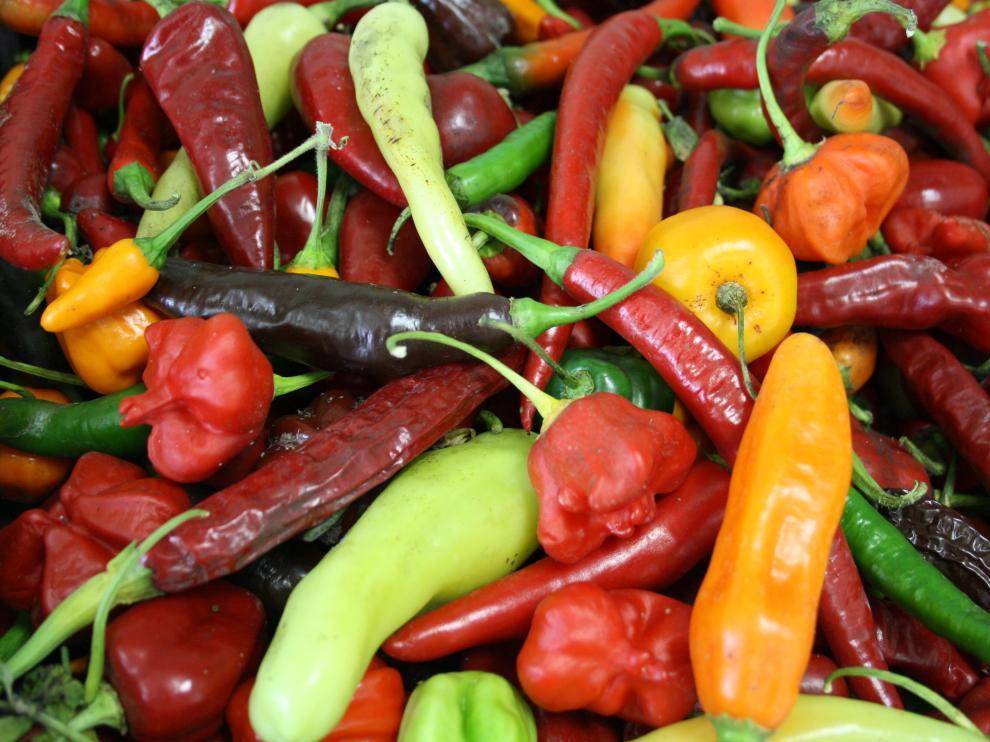 En la imagen, diferentes variedades de pimientos.