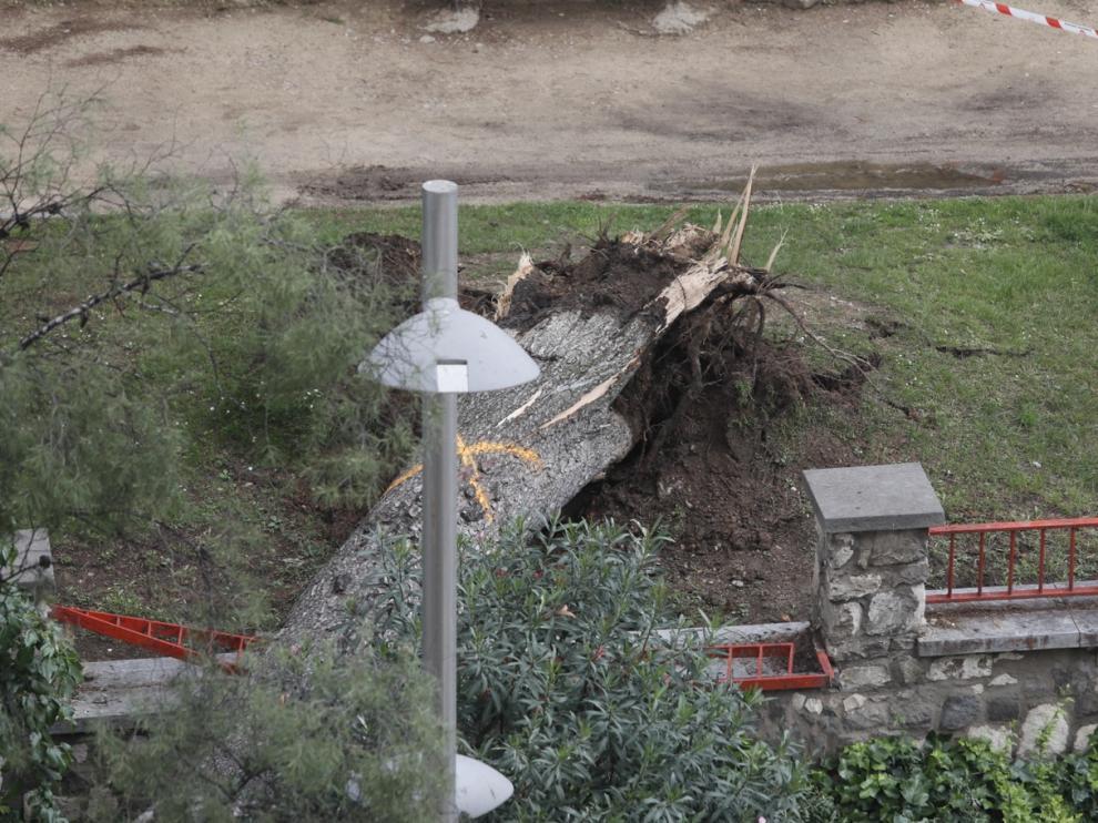 El árbol de grandes dimensiones ha cortado dos carriles de la calle Rioja