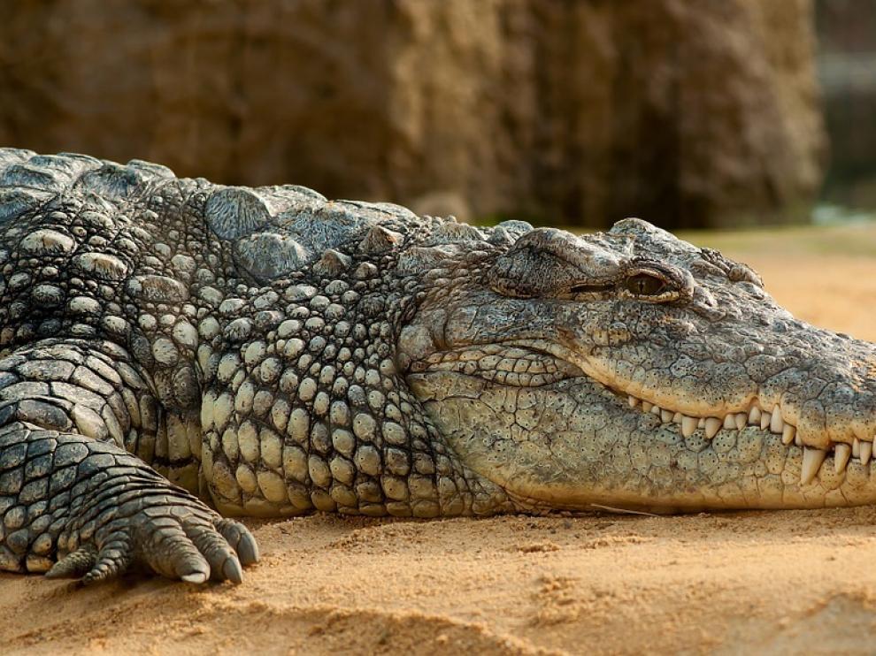 Cada año se registran más de 300 ataques de cocodrilos a humanos en África Subsahariana.