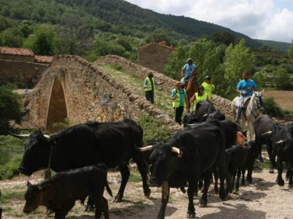 Ganados de ovino, caprino y vacuno han atravesado estos días la localidad.