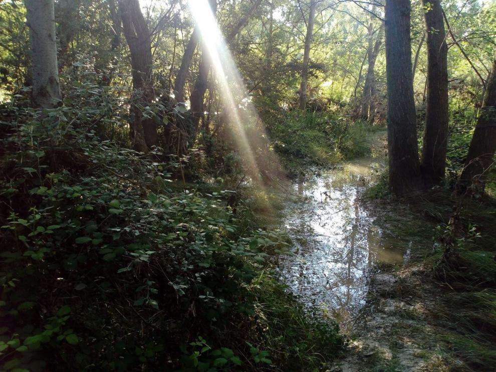 Humedal cercano al río.