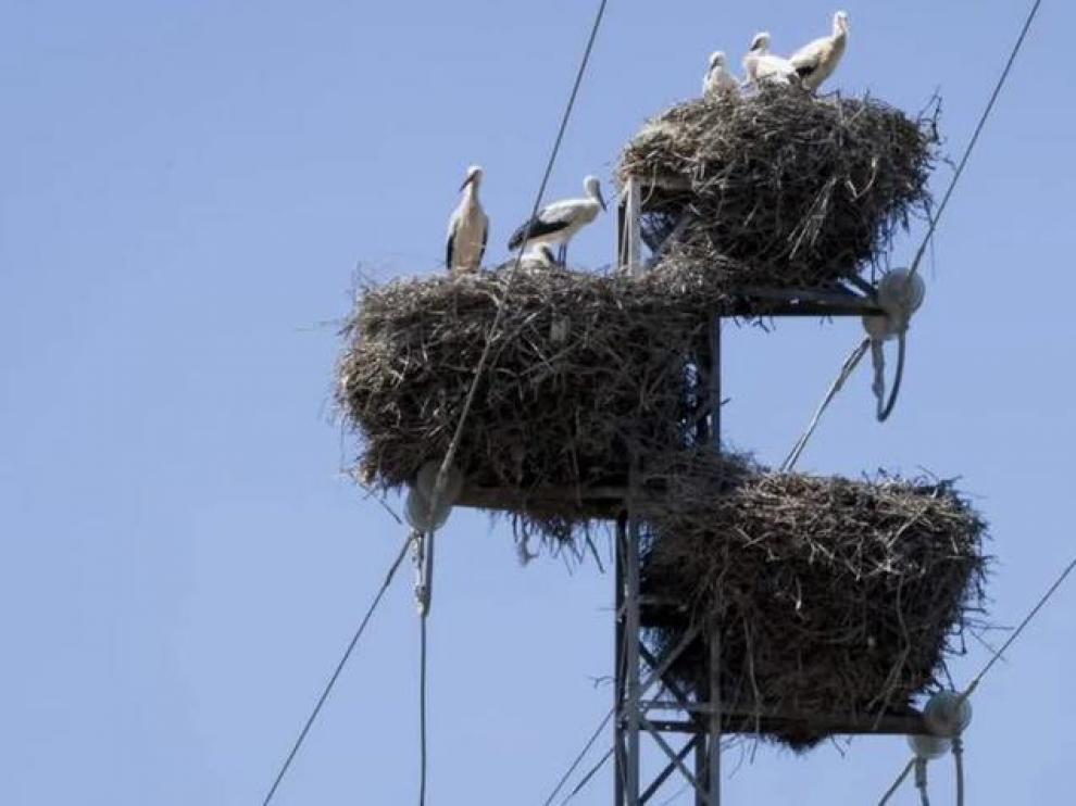 """""""Los nidos de cigüeña pueden generar cortes eléctricos"""""""
