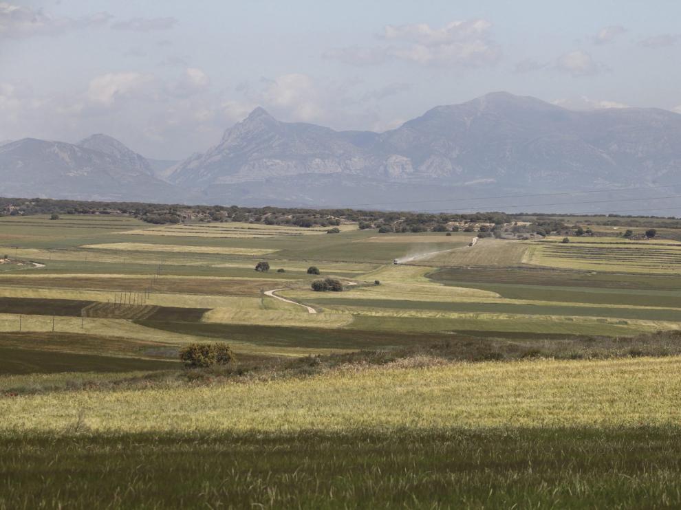 Campo de cereal en la Hoya de Huesca, entre Albero Alto y Novales.