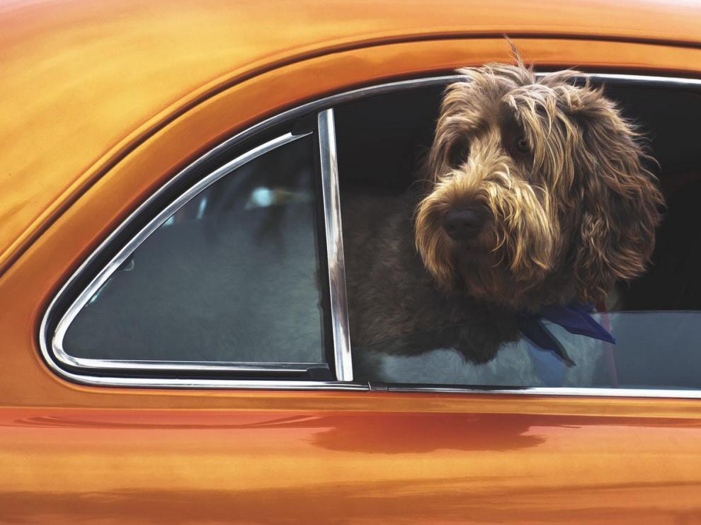 Si el viaje se va a realizar con un perro, es indispensable que este vaya bien sujeto.