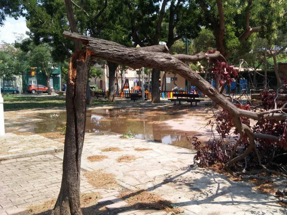 Un árbol dañado por la tormenta del 11 de julio.