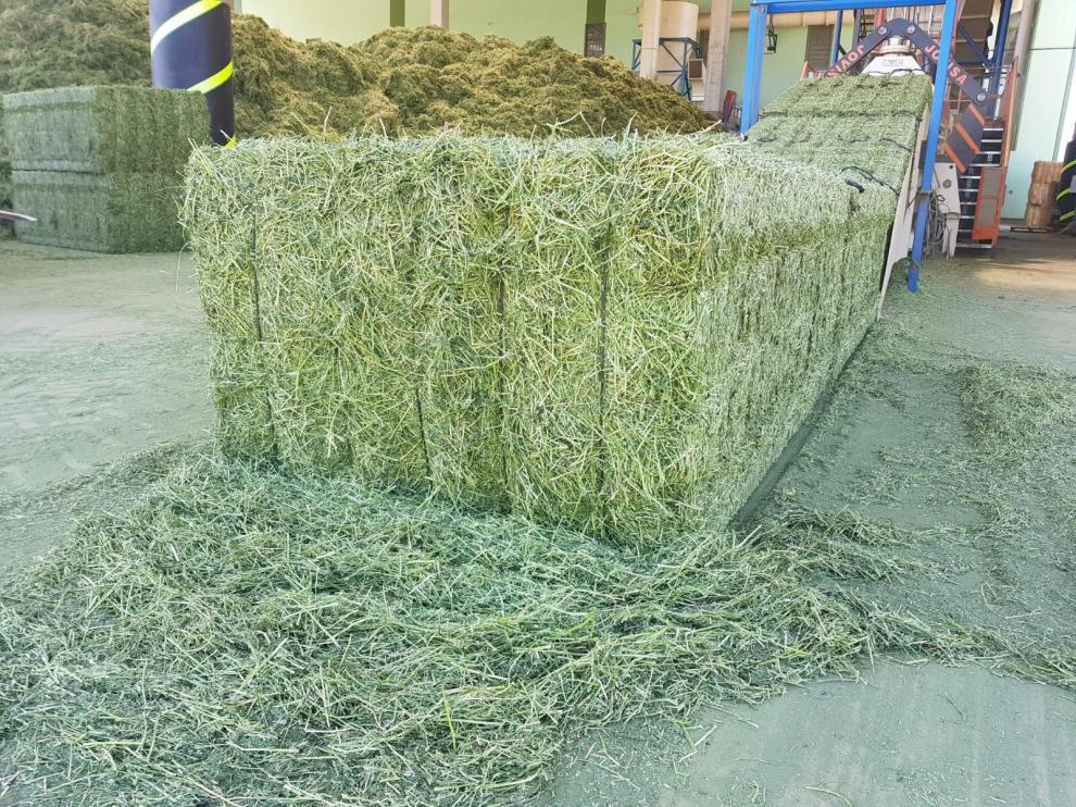 Pacas de alfalfa.