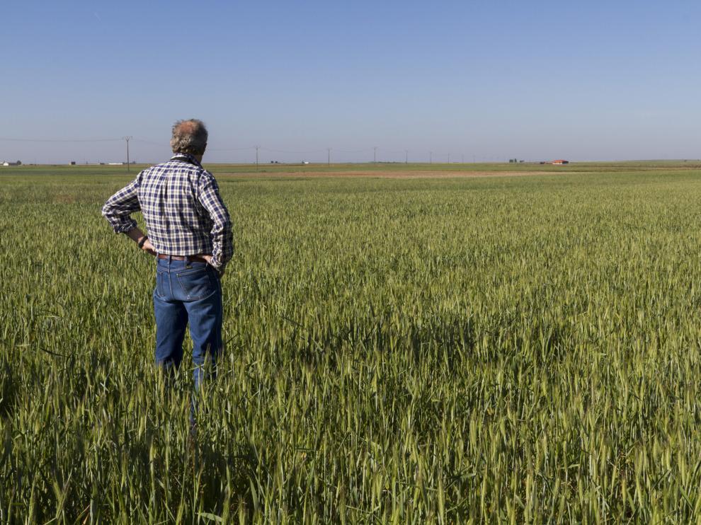 En la imagen, un productor, en su finca, donde está prevista la cosecha en breve de esta variedad de cereal, que responde al nombre de tritordeum.