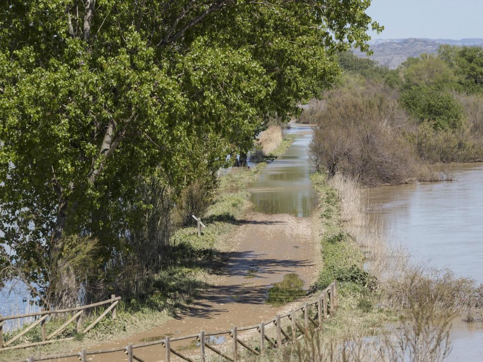 La riada del pasado mes de abril afectó considerablemente al camino de La Alfranca.