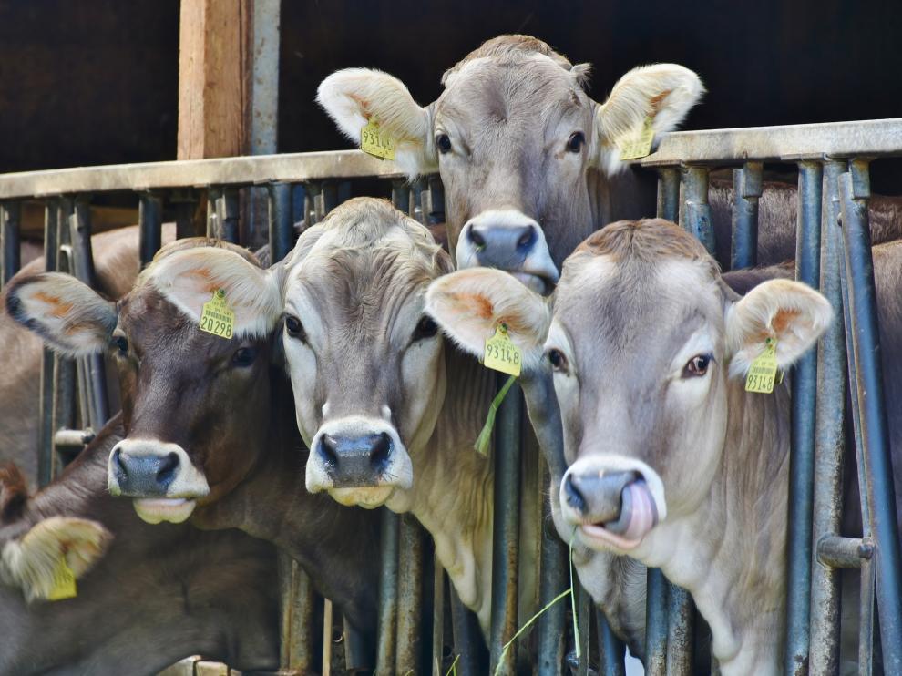 Los veterinarios madrileños creen que el futuro de la profesión está en la industria alimentaria.