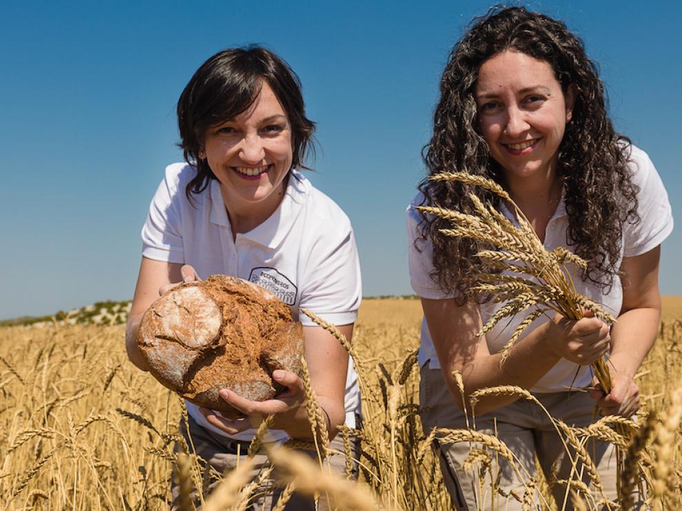 La familia Marcén ha recuperado la variedad de trigo Aragón 03