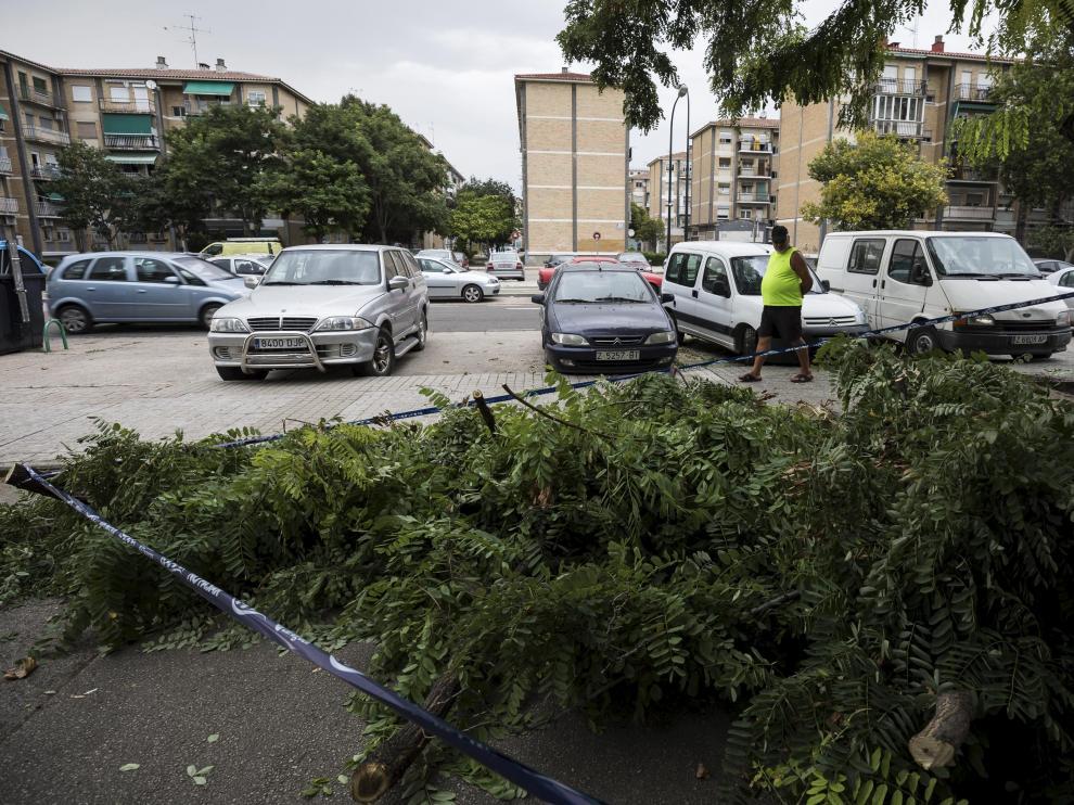 El viento ha derribado este árbol a la altura del número 5 de la calle Peña Oroel, causando algunos daños en un coche estacionado.