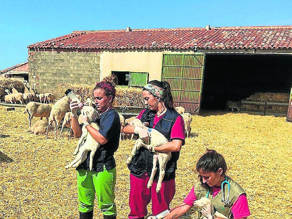 Clara, Laia y Ainhoa, en la granja.