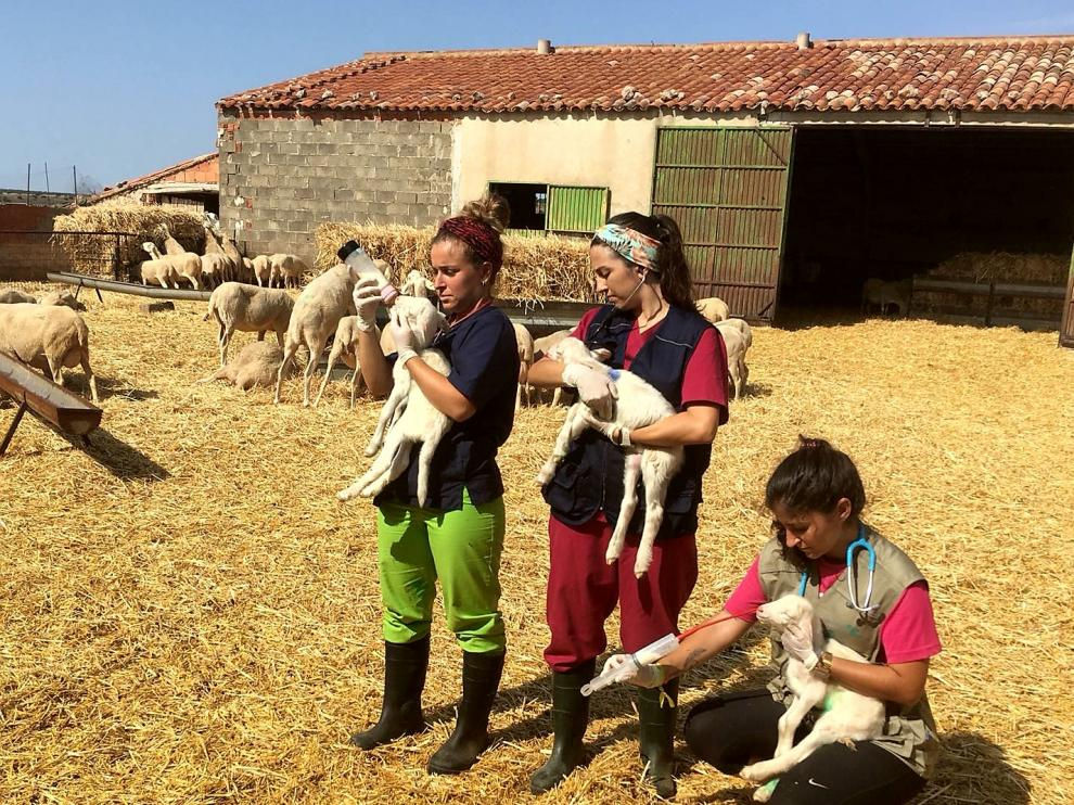 Granja de Cubel en la que cuatro jóvenes estudiantes de Veterinaria realizan las prácticas.