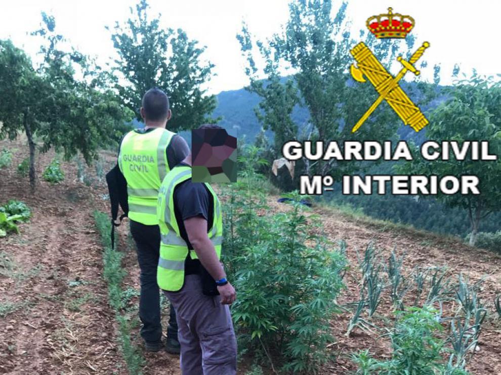 Plantación de marihuana desmantelada en Linares de Mora.