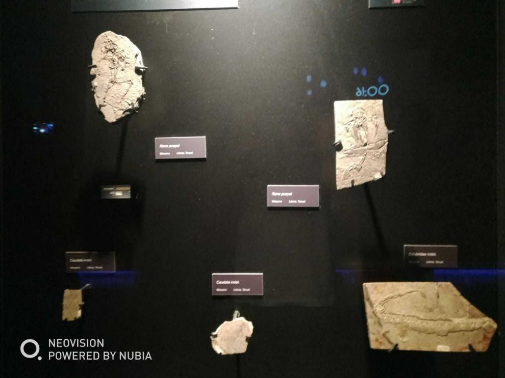 En la esquina izquierda inferior, el fósil sustraído de Dinópolis