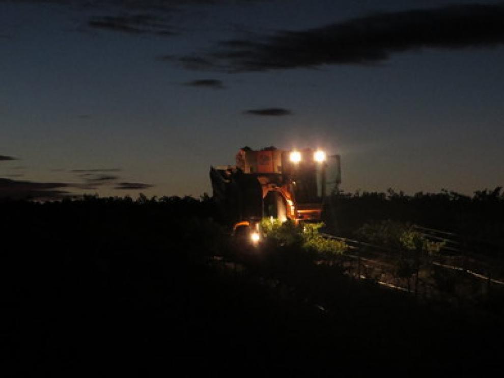 Una imagen de archivo de la vendimia nocturna en Bodegas Ejeanas.