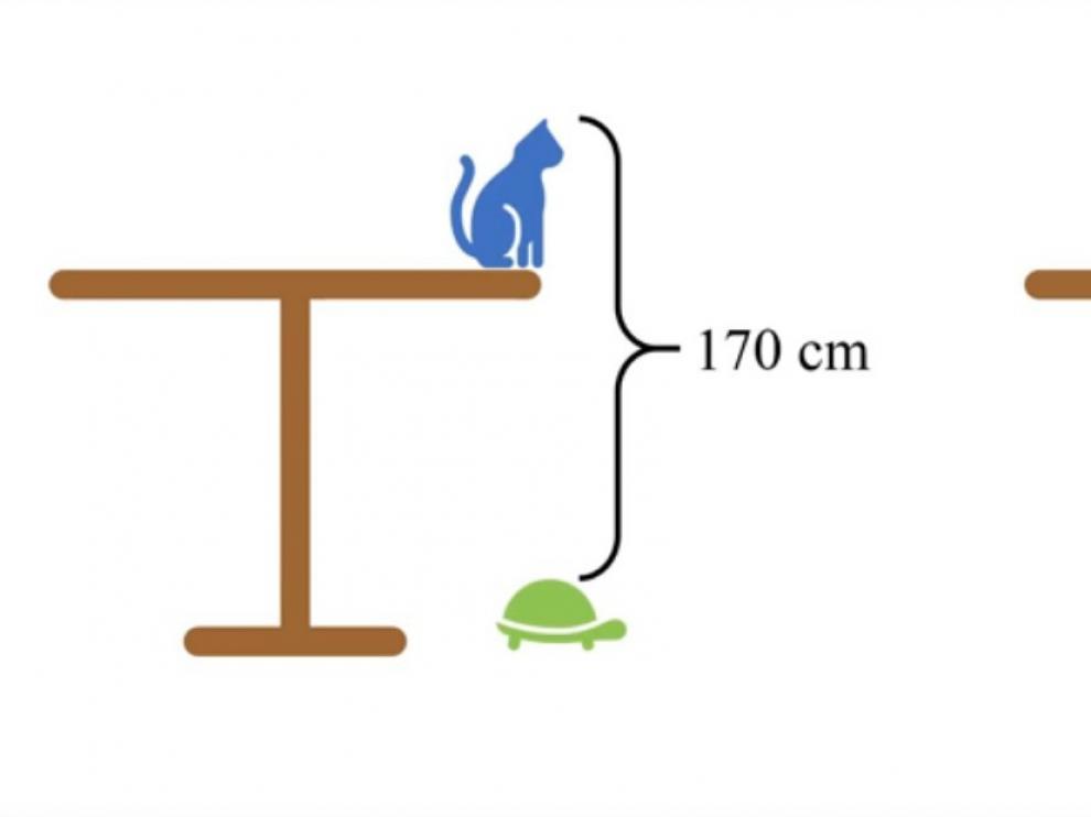 El acertijo de la mesa, el gato y la tortuga.