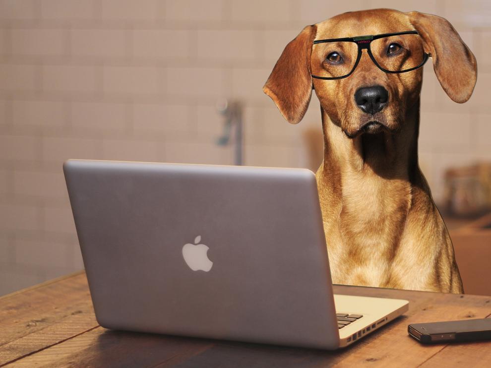 """Resultado de imagen de perro inteligente"""""""