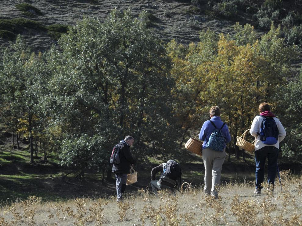 Recogida de setas en la Sierra de Albarracín.