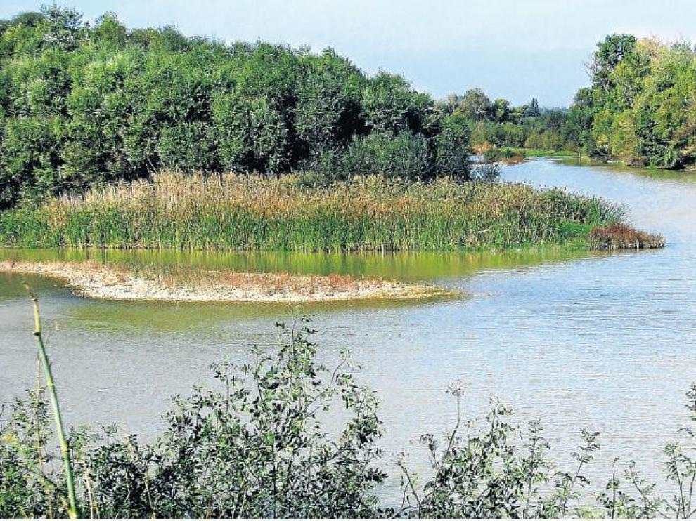 El Ebro discurre por el soto de la Madraza. Novillas.