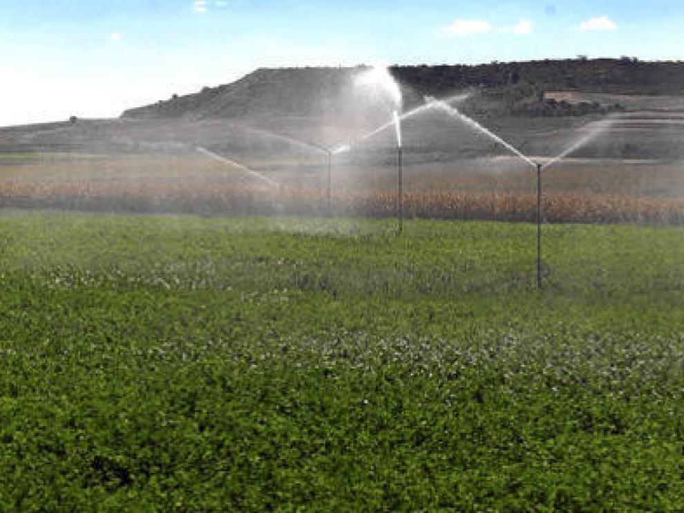 Riego por aspersión en un campo de alfalfa en la provincia de Huesca.