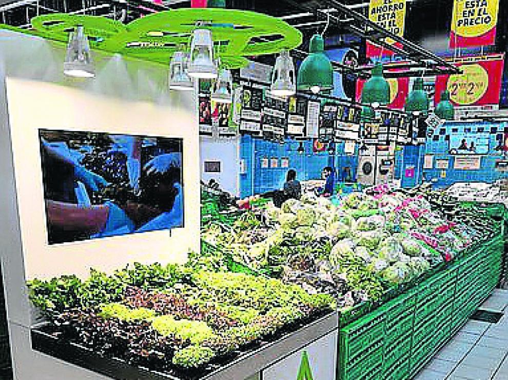 Expositor de Alcampo en Leganés (Madrid) en el que se ofrecen «lechugas vivas».