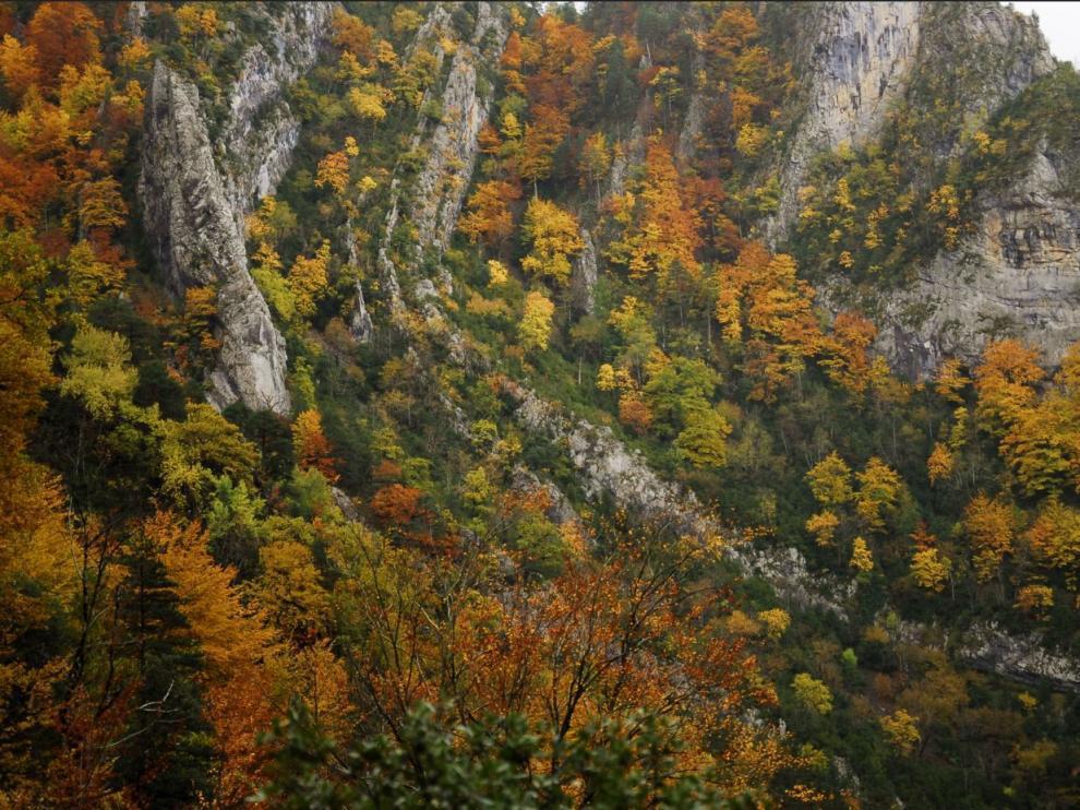 Desde lo alto, puede observarse en todo su esplendor el maravilloso cromatismo de los bosques de caducifolias al fondo del valle.