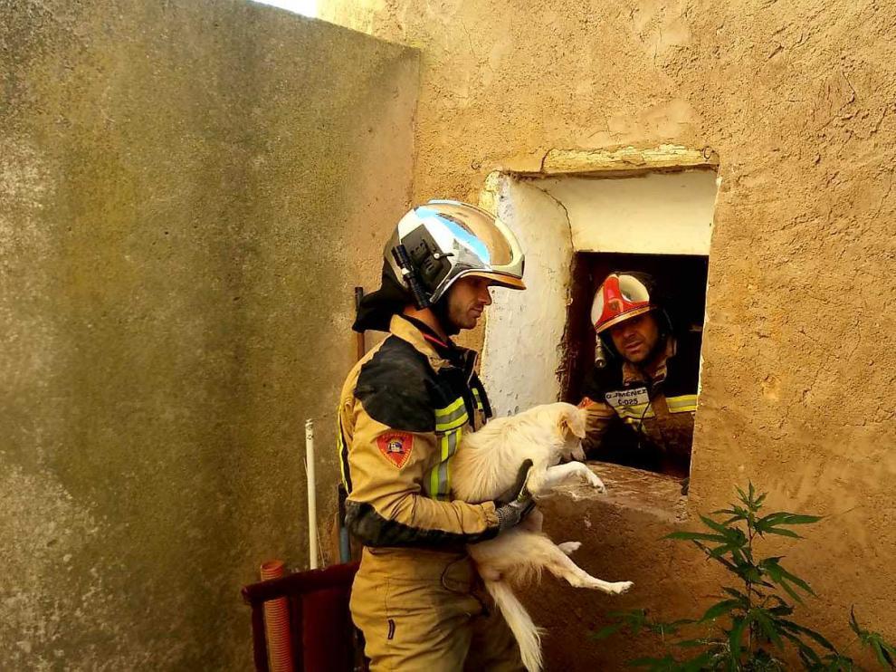 Los Bomberos de Tarazona han rescatado con vida al animal en una complicada operación tras el derrumbe de una casa en Novallas.