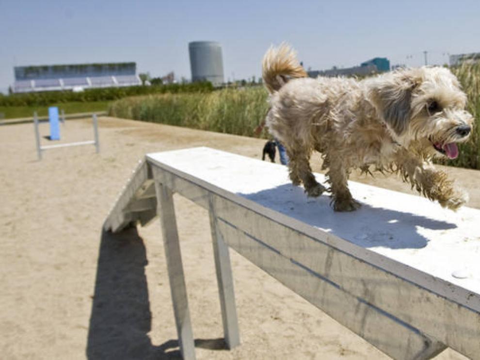 Zona para perros en el parque del Agua de Zaragoza.