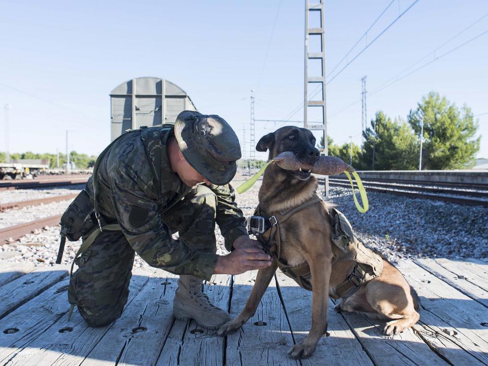 Un perro con una cámara colgada ha descubierto un explosivo en un vagón en la estación ferroviaria de San Gregorio