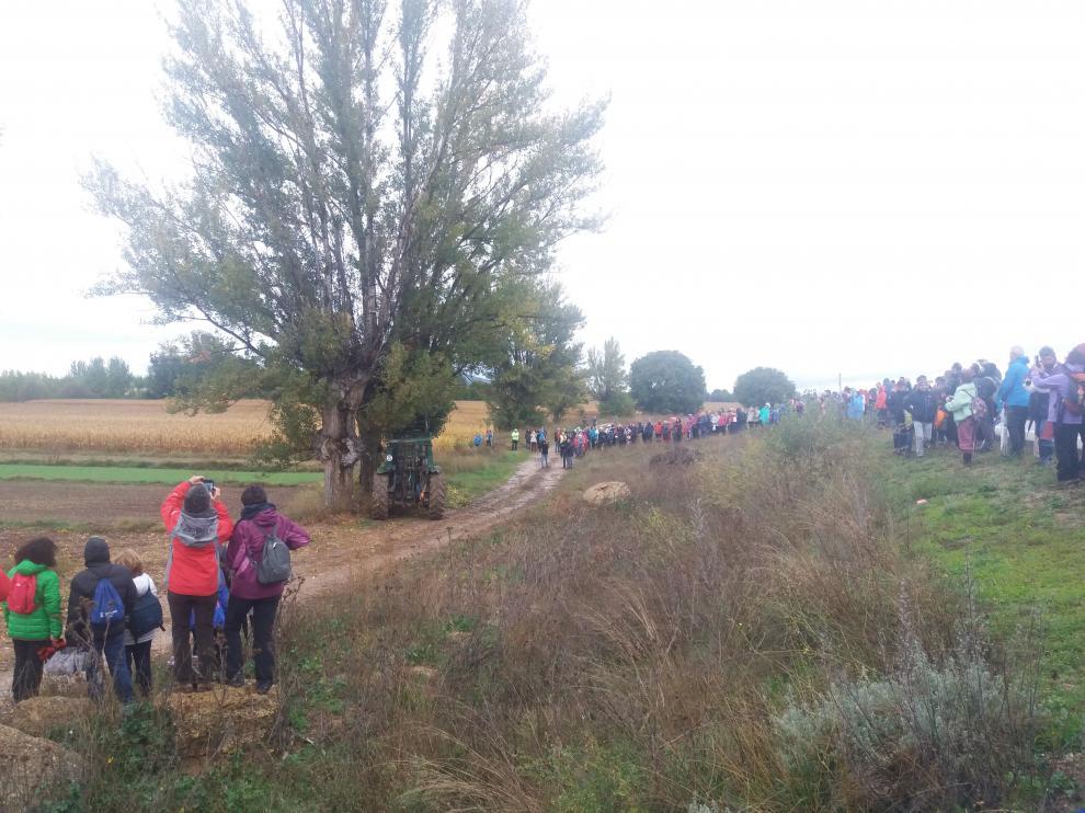 El público presencia la exhibición de poda del chopo cabecero en Torrijo.