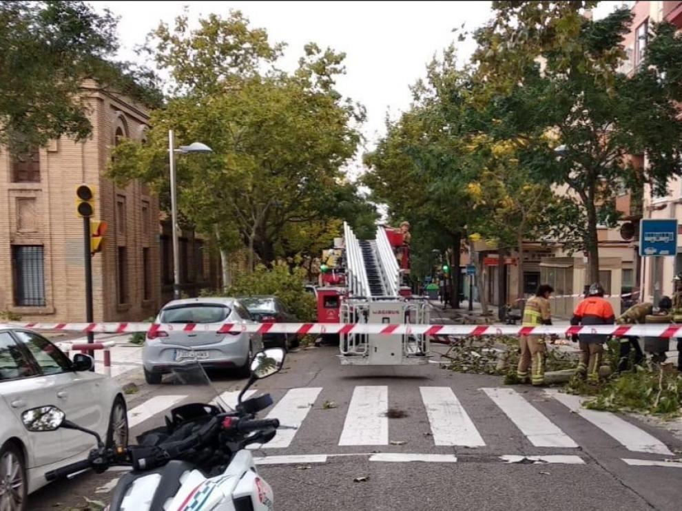 La avenida América, cortada diez minutos por la caída de un árbol