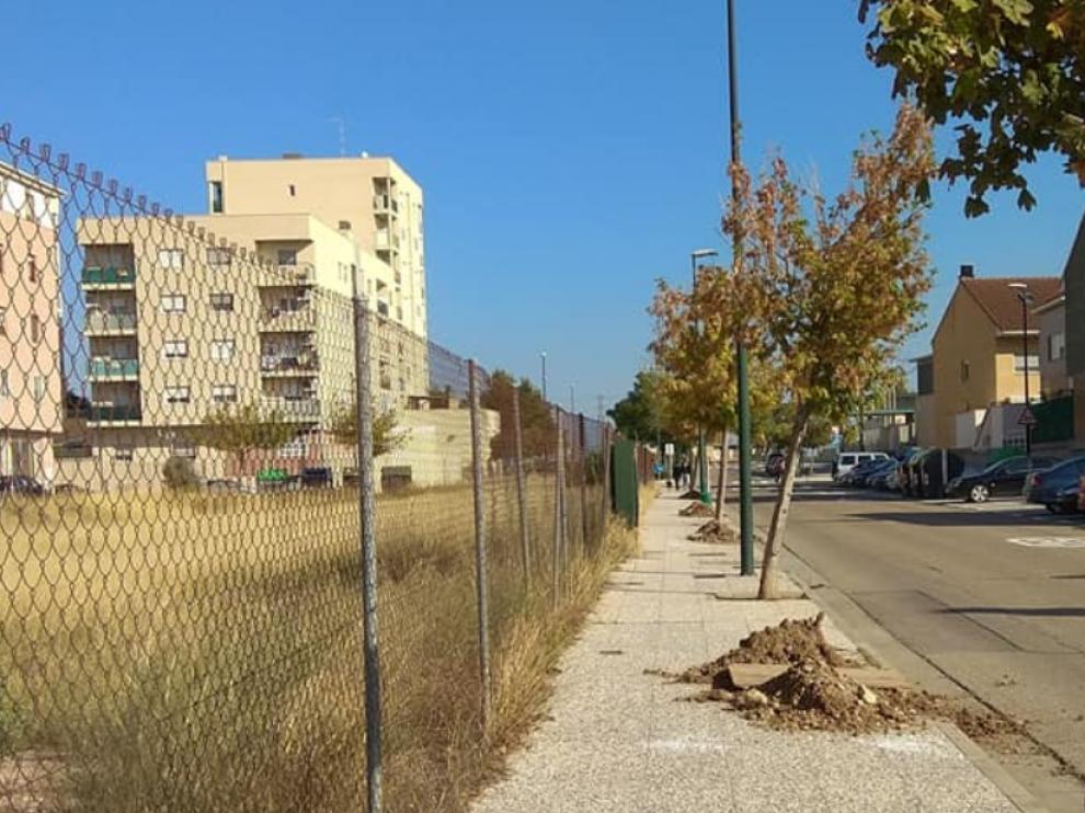 La plantación de nuevos árboles se está llevando a cabo por todo el barrio