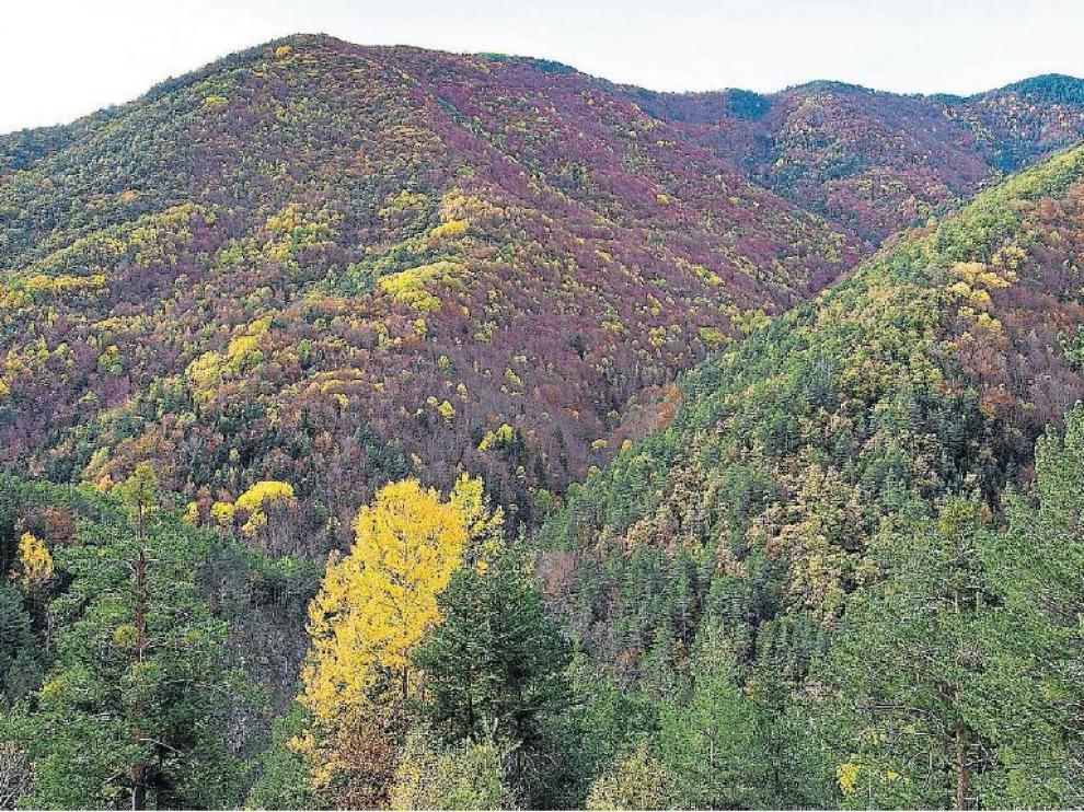 Vista panorámica del bosque de la Pardina del Señor, en otoño.