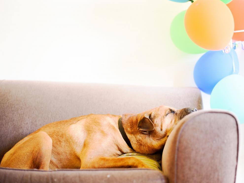 La mayoría de las mascotas campan a sus anchas por los hogares.