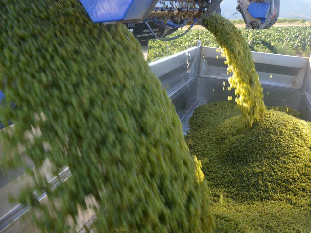 La agricultura es el sector en el que más ha subido el paro en Aragón este mes de octubre.