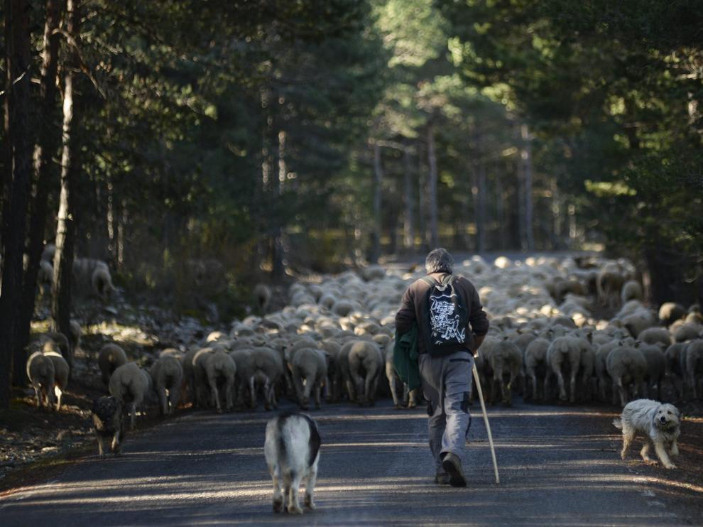 Inicio de la trashumancia en la Sierra de Albarracín