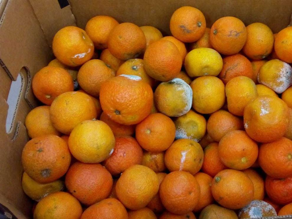 Una empresa de catering distribuyó mandarinas podridas a ...