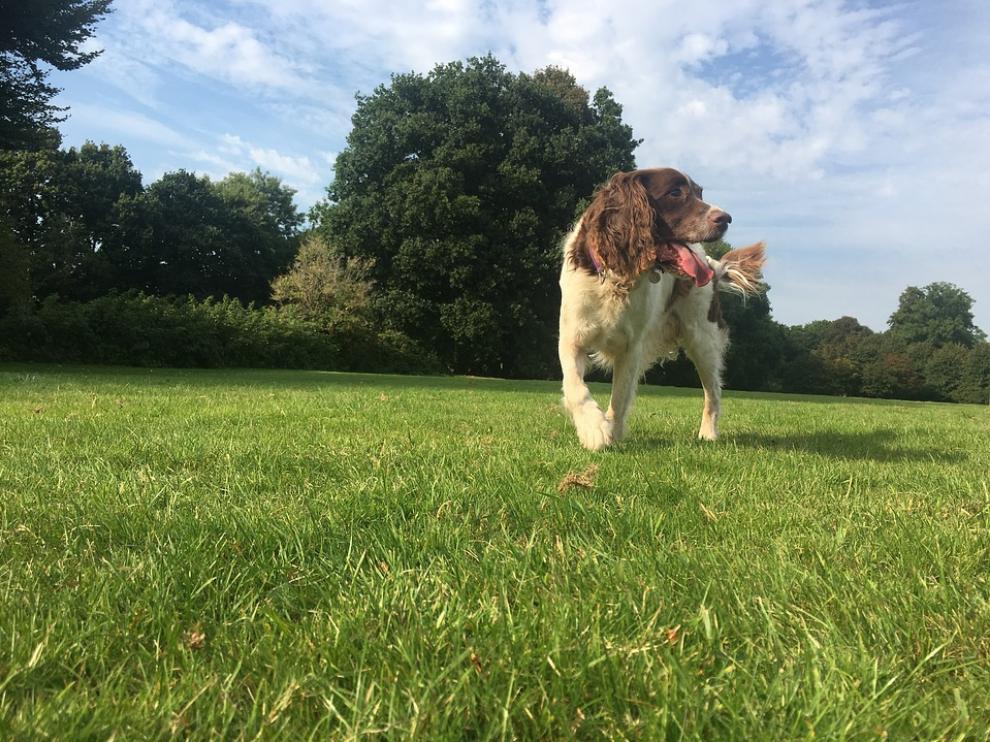 Imagen de archivo de un perro paseando por un parque.
