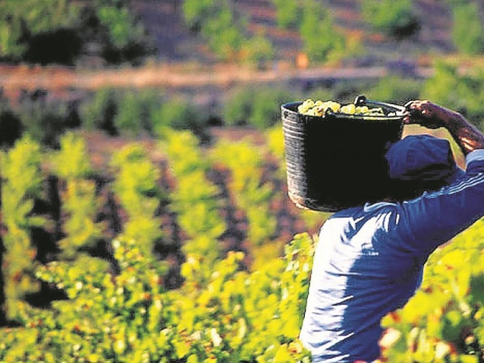 Imagen de una cosecha en el campo de Calatayud.