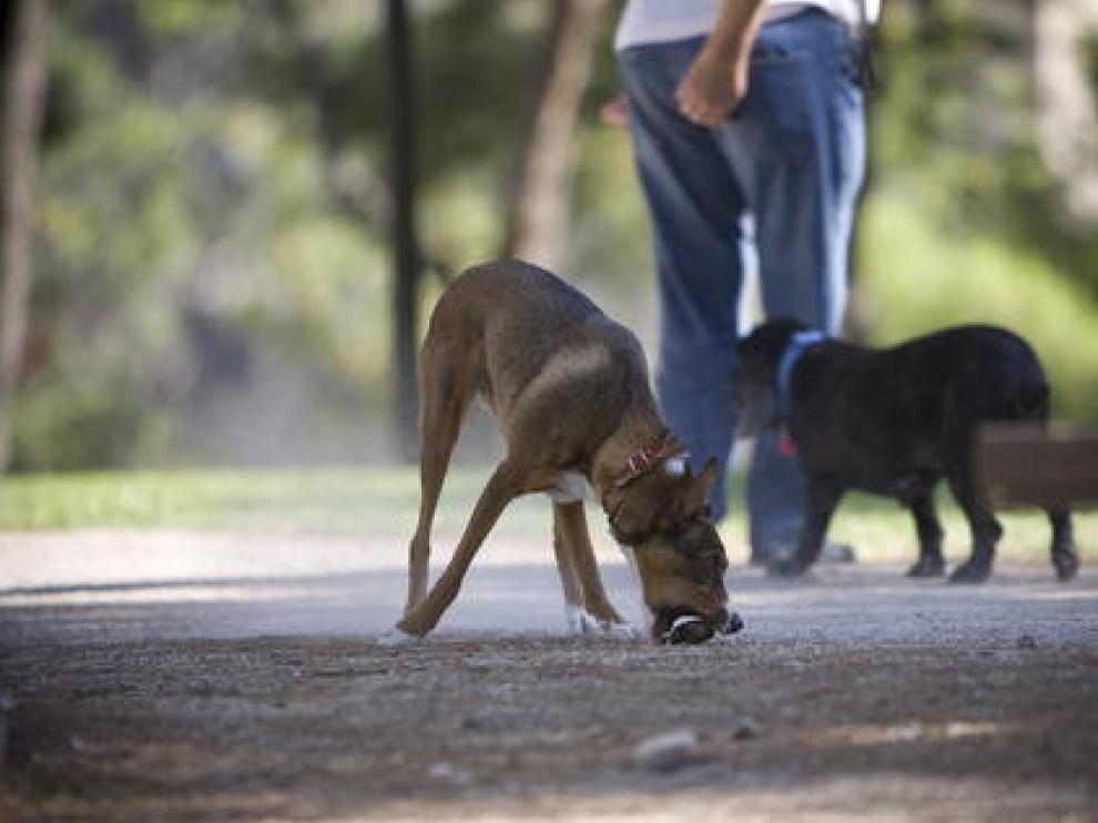 La campaña pretende conciencia a los dueños de los perros