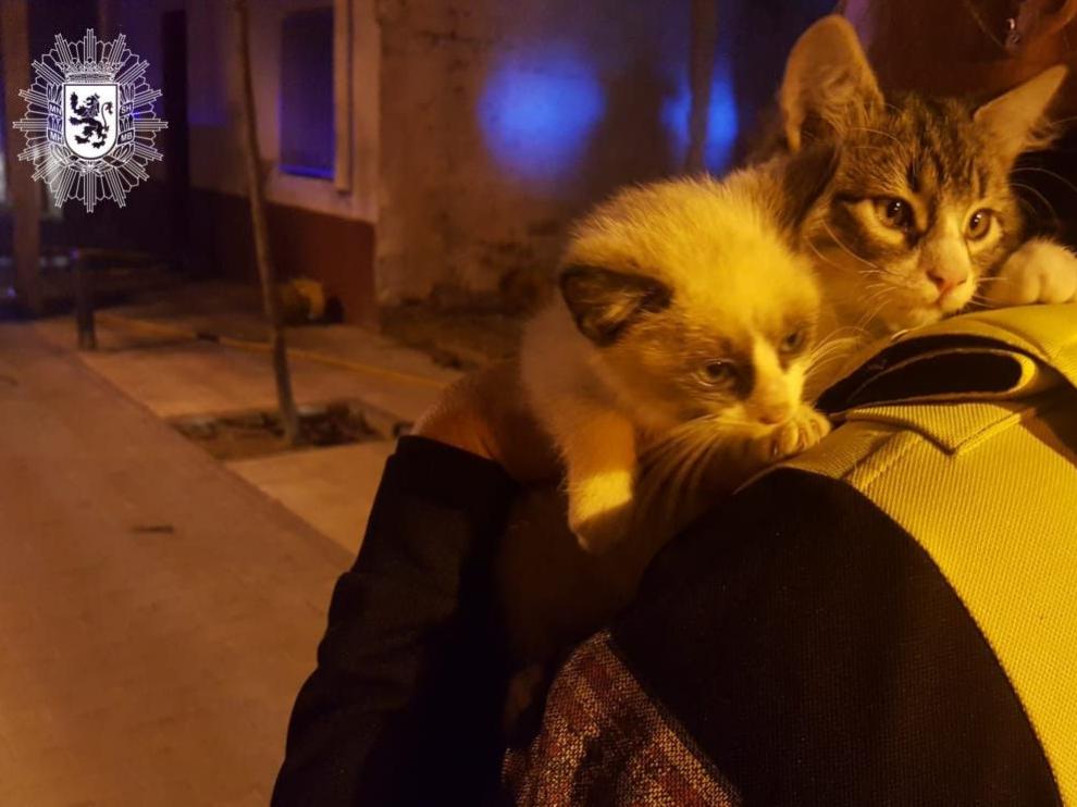 La Policía Local se hizo cargo de los gatitos rescatados hasta que localizaron a su dueña.