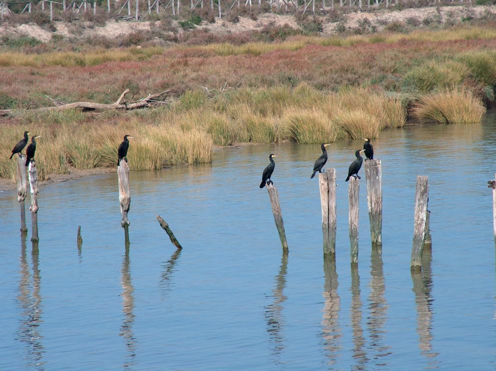 Se tratará de conseguir un equilibrio hídrico en el entorno del Parque Nacional de Doñana.