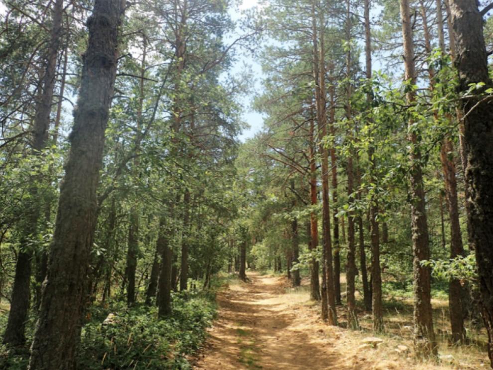 Sierra del Tremedal, en Orihuela del Tremedal, donde se ha desarrollado la investigación Therapy Forest, sobre baños forestales.