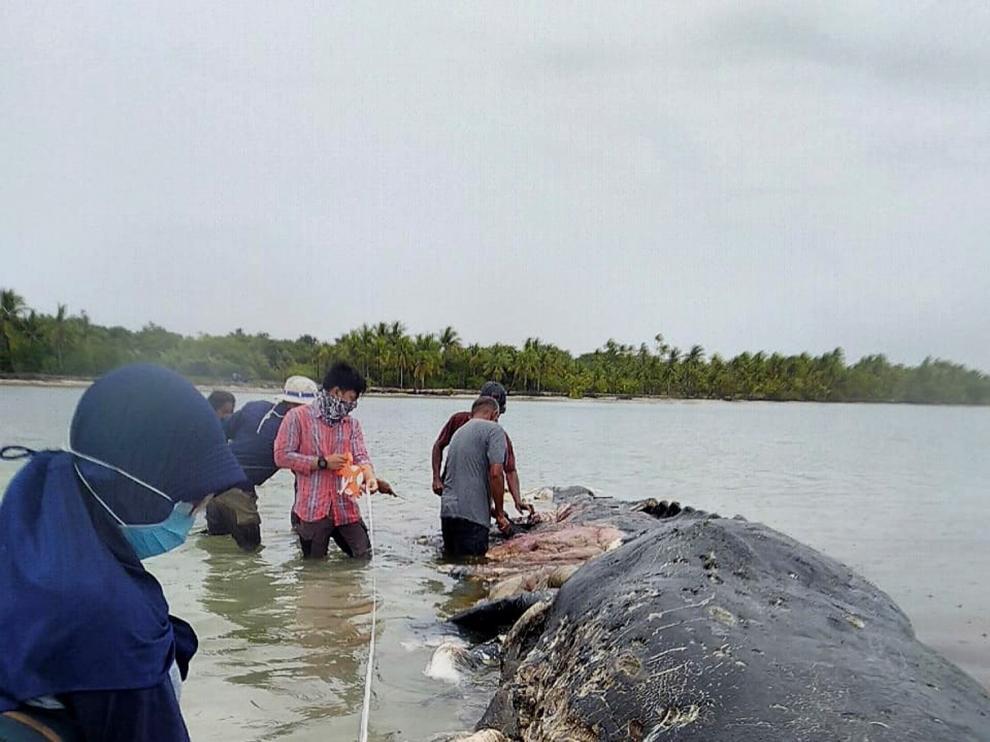 Hallan en una isla de Indonesia un cachalote muerto con seis kilos de plástico en el estómago
