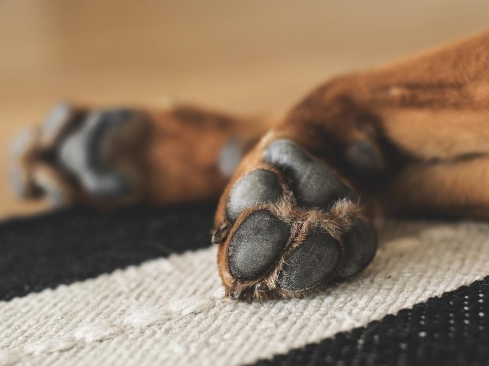 En abril adoptó a una perra de corta edad a la que torturó, mutiló, violó y mató días después, según la CEDA.