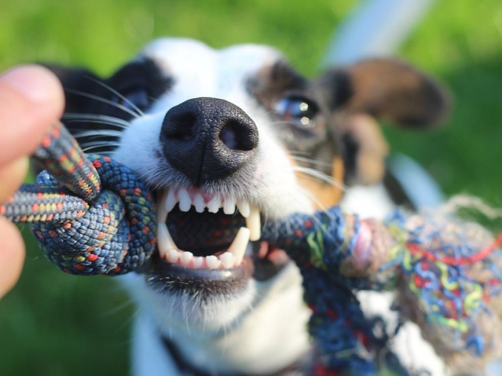 Cualquier perro puede mostrar signos de agresividad