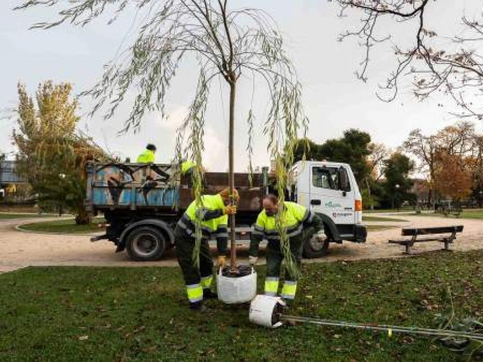 Plantación de árboles en el Parque Tío Jorge