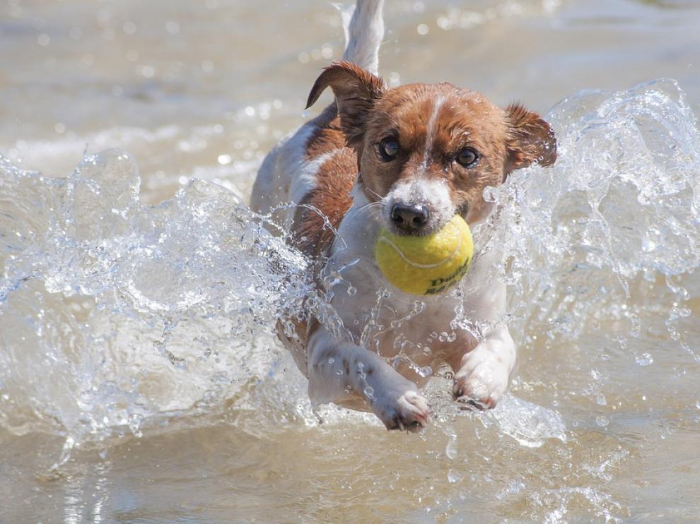 No, este no es el 'perro portero', pero casi.