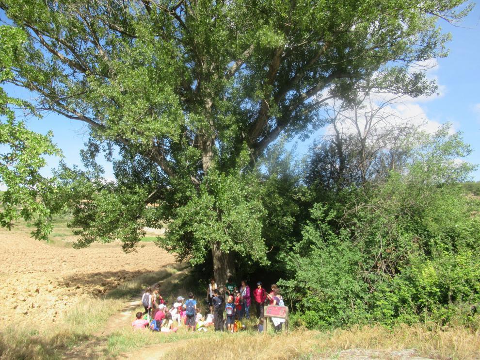 Un grupo de visitantes descansa junto a un árbol en el sendero botánico de la Val de Molinos, en Andorra.